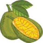 菠萝蜜短视频app下载_菠萝蜜短视频app最新版免费下载